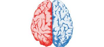 Glem manne- og kvinnehjernen