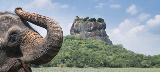 Herlige Sri Lanka