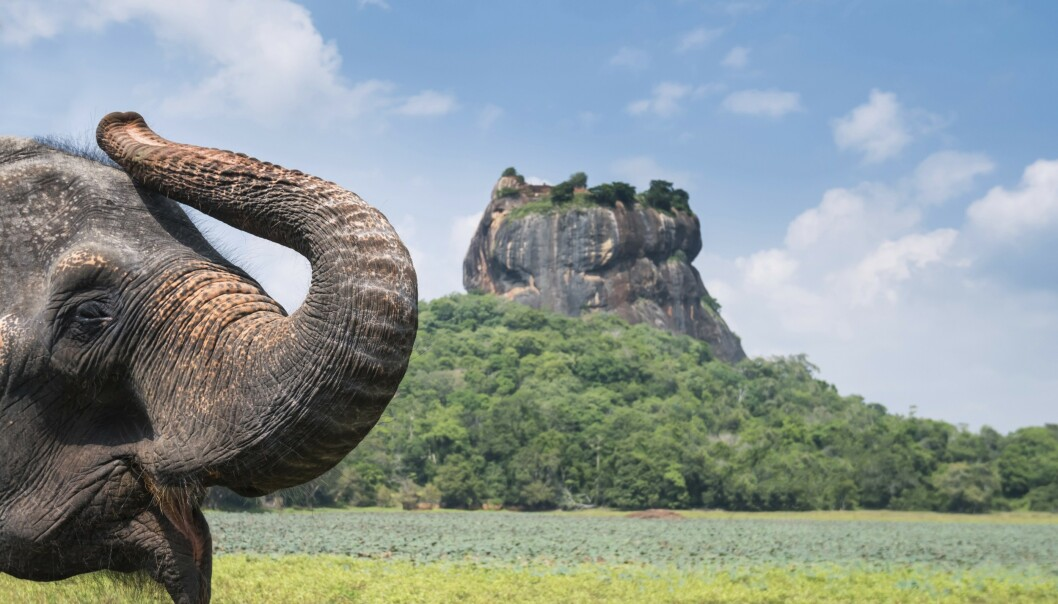 Løveklippen Sigiriya er en av landets store severdigheter og står på verdensarvlisten.