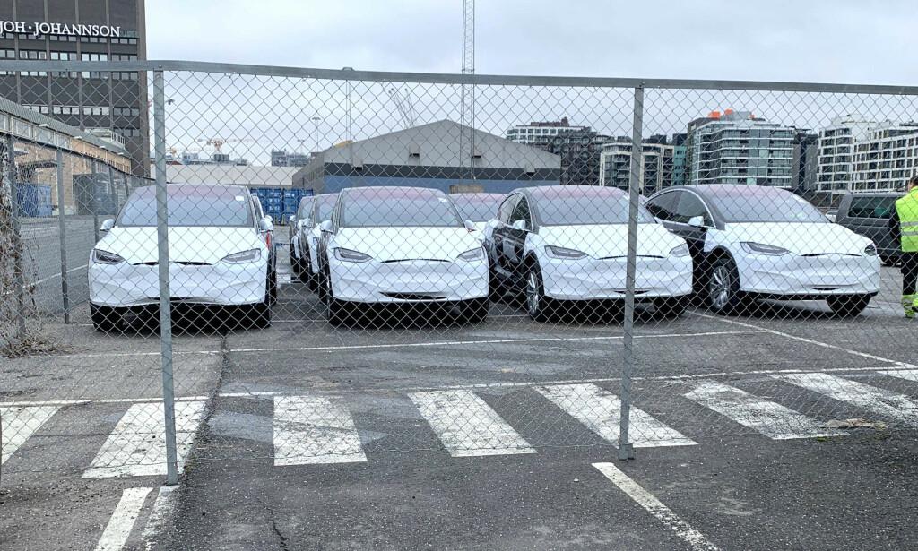 SALGET STUPER: Teslas registreringstall har falt med over 80 prosent, sammenlignet med rekordmånedene i 2019. Her er bilde fra Filipstadkaia i Oslo, hvor det i løpet av året ankom rekordmange Teslaer. Foto: Ingebjørg Iversen