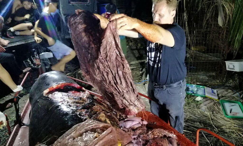image: Død hval hadde 40 kilo plast i magen