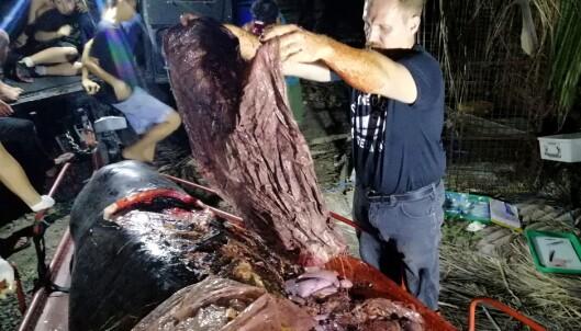 Død hval hadde 40 kilo plast i magen