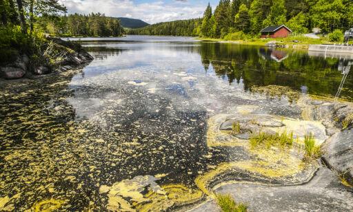 image: Kan bli et ekstremår for pollen