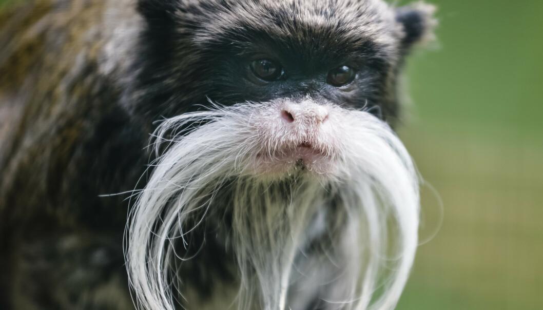 HVEM ER DETTE? Ser du hvilket dyr dette er? Foto: Milan Vachal / Shutterstock / NTB scanpix.