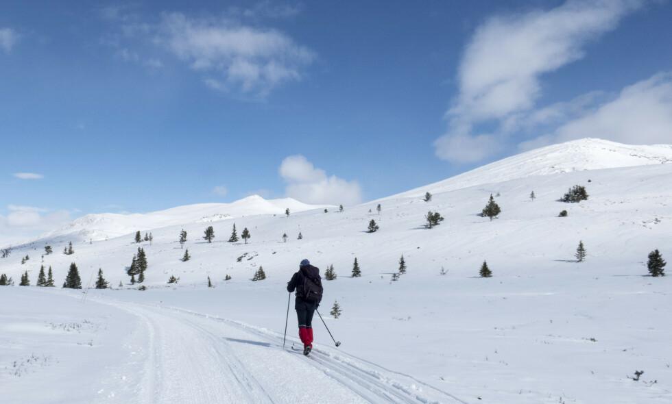 DET STORE SPØRSMÅLET: Hvorfor oppsøke vintereren når våren er kommet? Hvorfor? Foto: Paul Kleiven / NTB scanpix