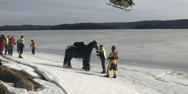 image: Dramatisk redningsaksjon etter at hest gikk gjennom isen