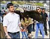 Ørner skal beskytte turister mot måkeangrep
