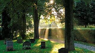 on sale 4665b 24198 I Norge er det gratis å bli født, men det er dødsdyrt å dø