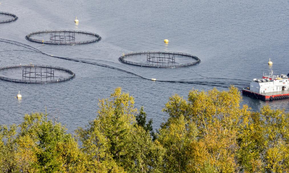 BLÅTT TAKTSKIFTE: Vi må øke matproduksjonen i havet. Mer enn 70 prosent av kloden er dekket av saltvann. Mindre enn 5 prosent av matproduksjonen skjer i havet, skriver innsenderen. Bilde fra et fiskeoppdrett i Sjona, på Helgelandskysten. Foto: Gorm Kallestad / NTB scanpix