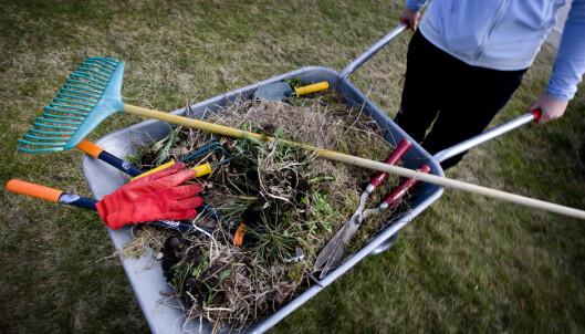 Pristest: Her får du hageredskapene billigst