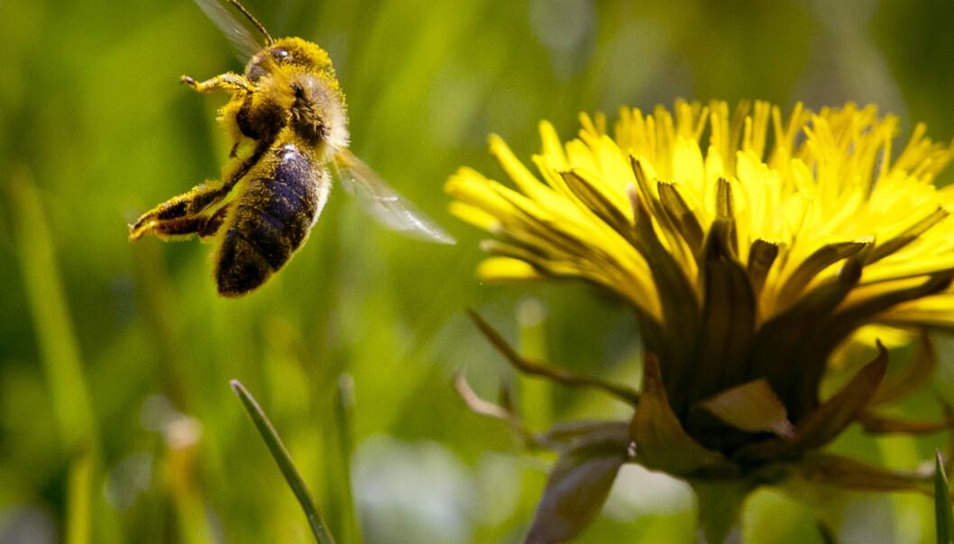 Forsker: – En samfunnsmessig og økologisk krise i verden