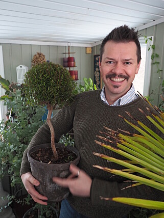 -VELG STOR NOK POTTE: Det tipser Espen Skarphagen, blomsterdekoratør og hageskribent på Skarpihagen.no. Foto: Privat.