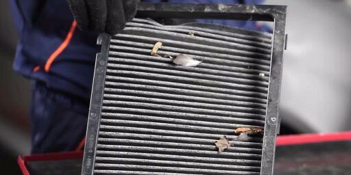 image: Derfor bør du sjekke pollenfilteret på bilen
