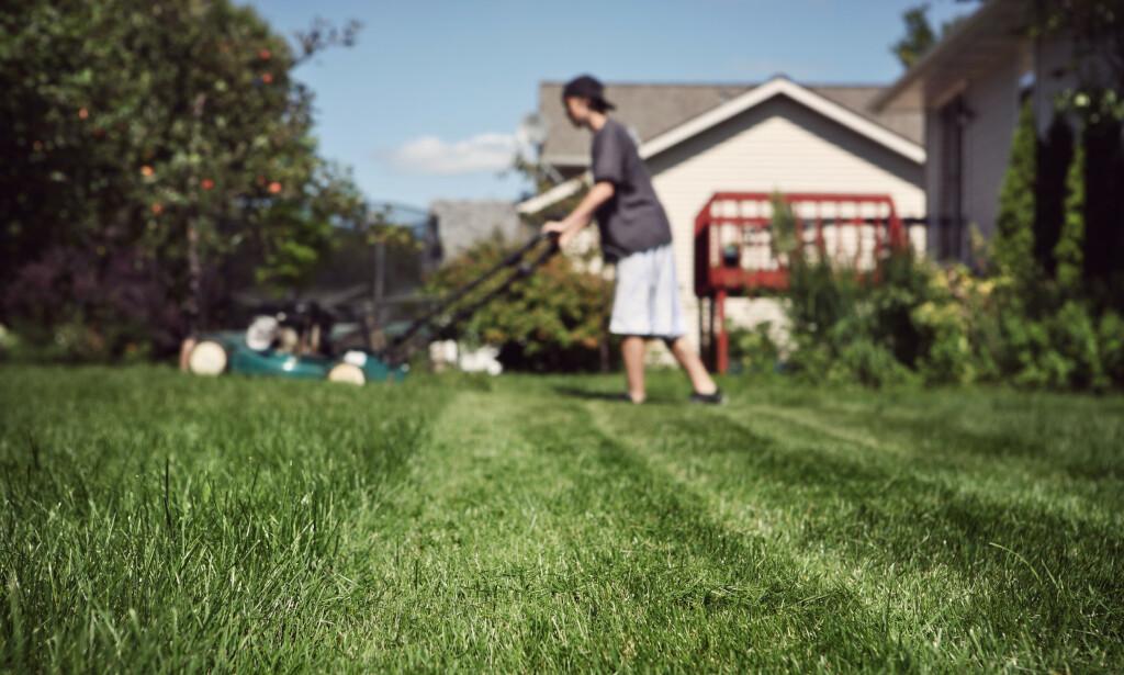 LØNNSOM SOMMER: Flere unge kan tjene noen kroner på å ta en sommerjobb, enten i en bedrift, eller ved å tilby enkle tjenester mot betaling i nabolaget, for eksempel plenklipping. Foto: Shutterstock/NTB Scanpix.
