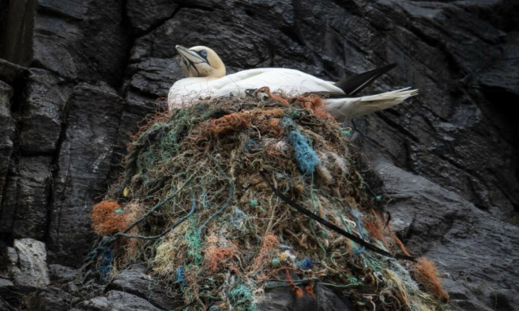 HEKKER: Mer enn 500 000 fugler - blant dem lundefugl, havsule, storjo og toppskarv hekker på Runde hvert år. Foto: Roger Brendhagen