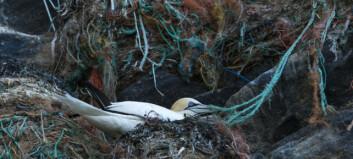 Ber fiskeriene ta ansvar: - Forferdelig