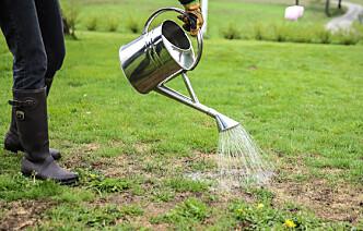 Tørre flekker: En liten dæsj oppvasksåpe i vannet gjør at jorda klarer å holde på fuktigheten. Foto: Øivind Lie-Jacobsen