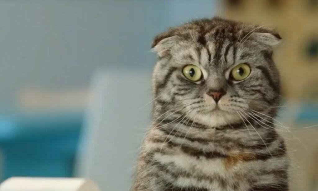 image: Raser mot Finn-katt: - Ytterst kritikkverdig