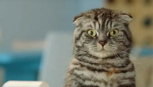 Raser mot Finn-katt: - Ytterst kritikkverdig