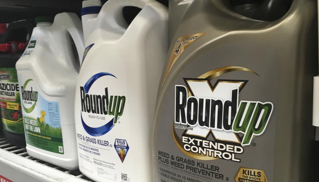 Monsanto har tapt sin tredje sak i retten der de sto saksøkt for å ha forårsaket kreft hos brukere av ugressmiddelet Roundup Foto: Haven Daley / AP / NTB scanpix