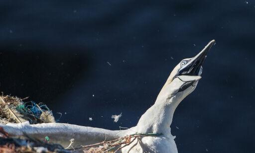 image: - Her kjemper fuglen for livet
