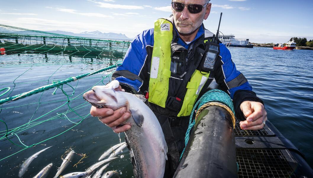 <strong>- TRIST SYN:</strong> Tom Jarle Bjørkly forteller at han ville gråte da han så all den døde fisken. Foto: Hans Arne Vedlog / Dagbladet