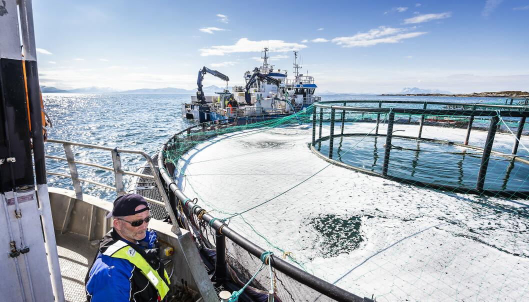 <strong>PUMPER OPP DØD FISK:</strong> Her pumpes den døde fisken som ligger på bunnen opp i kasser på båten. Foto: Hans Arne Vedlog / Dagbladet