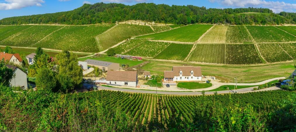 UNIK SMAK: Den karakteristiske mineraliteten er det som kjennetegner en Chablis og skiller den fra andre chardonnaybaserte viner. Her fra en vingård i Chablis, Frankrike. Foto: NTB Scanpix