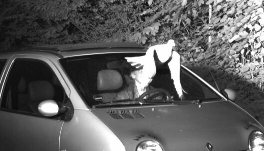 Due reddet sjåføren fra fartsbot