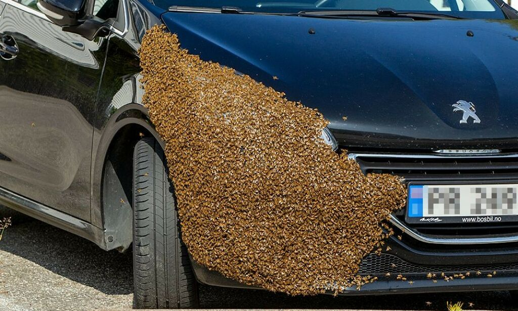 image: Opp mot 10 000 bier «kapret» bilen