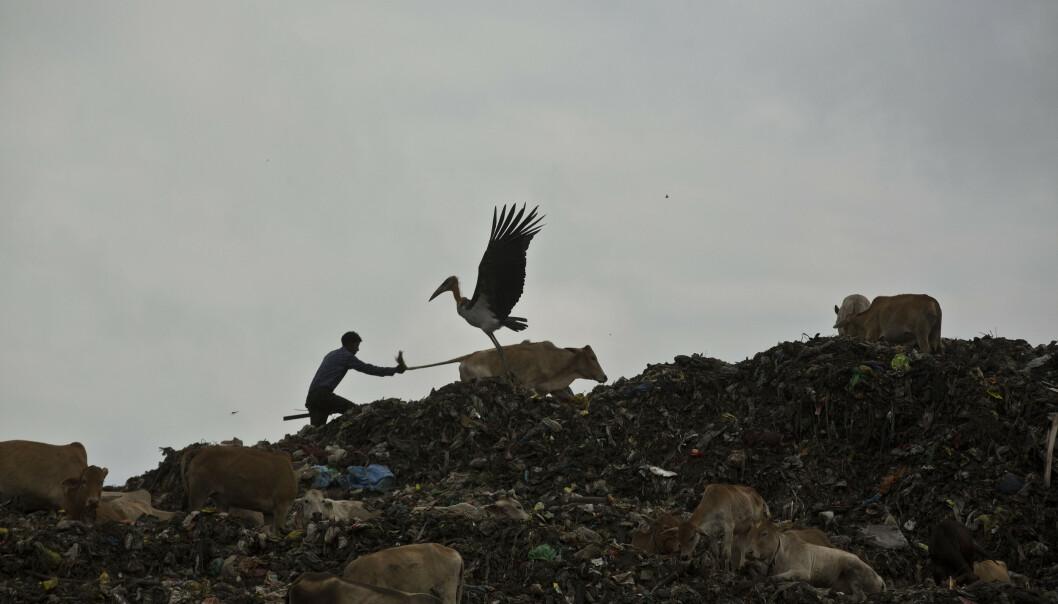 En søppelplass i Gauhati i India. Landets miljøinnsats får strykkarakter i en ny rapport. Foto: Anupam Nath / AP / NTB scanpix
