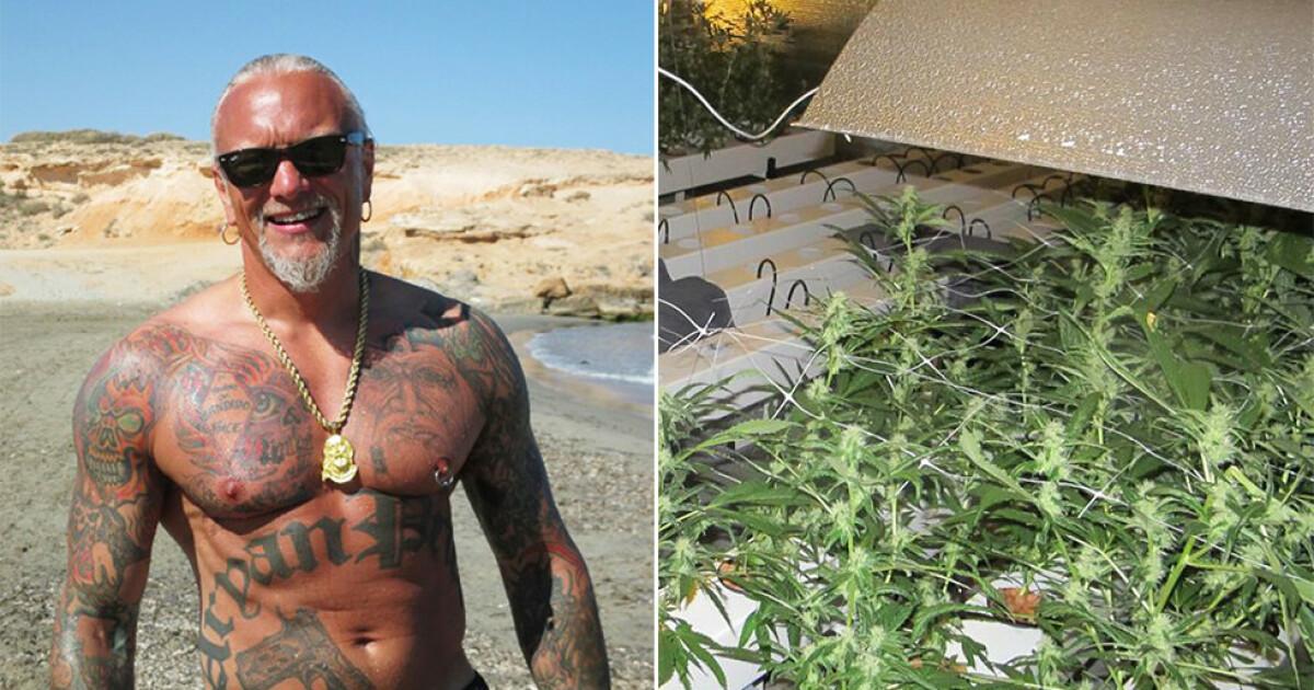 Harnes frikjent for cannabisdyrking