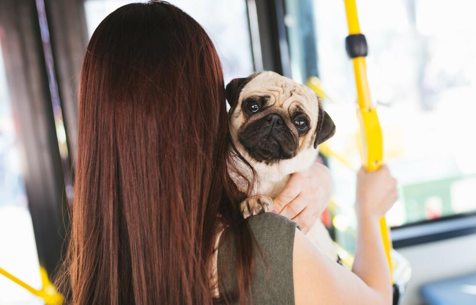 STRESS SMITTER: Ny studie viser at hunden din blir stresset av at du stresser.