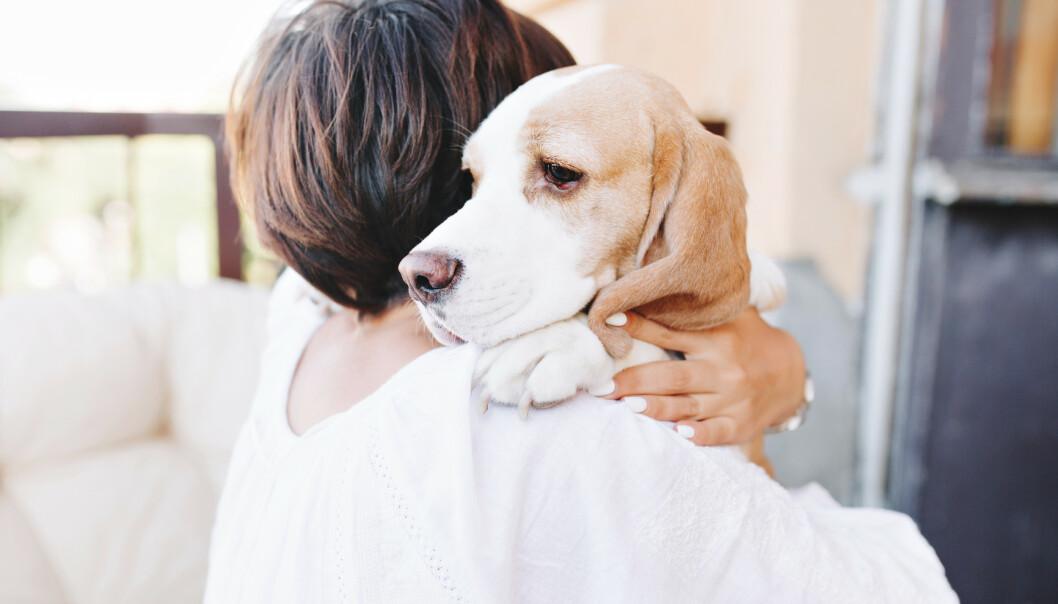 TRØSTER: De fleste hundeeiere kjenner seg nok igjen i at hunden blir ekstra oppmerksom når de er lei seg, noe som viser hvor gode hunder er til å lese oss.