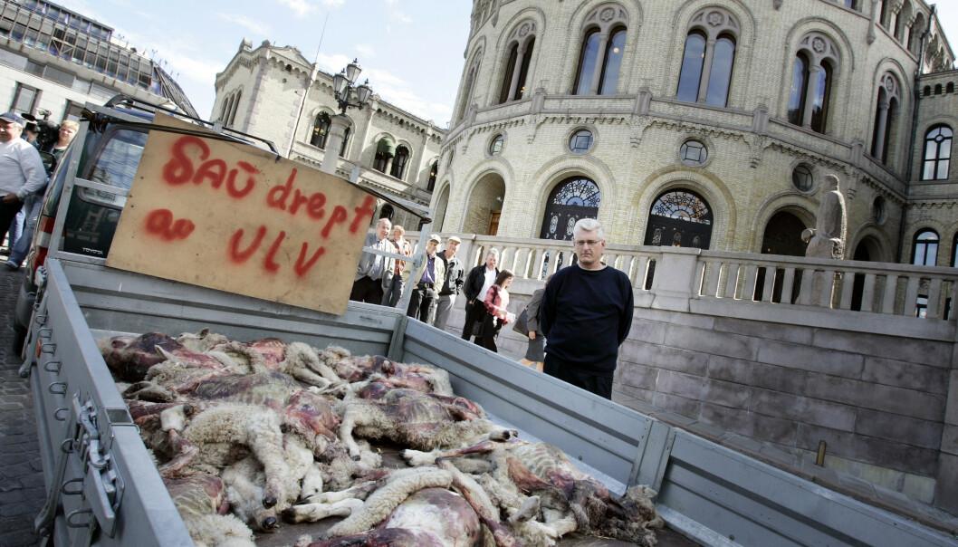 MANGEÅRIG STRID: Sauebønder fra Hedmark utenfor Stortinget med en tilhenger full av sauekadavre som er drept av sau. BIldet er fra 2004. Foto: Tor Richardsen / SCANPIX