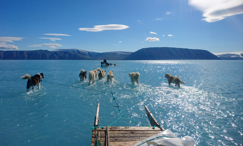 LØPER «PÅ VANNET»: Her løper hundene «på vannet» som følge av avsmelting på Grønland. Foto: Steffen M. Olsen / NTB scanpix