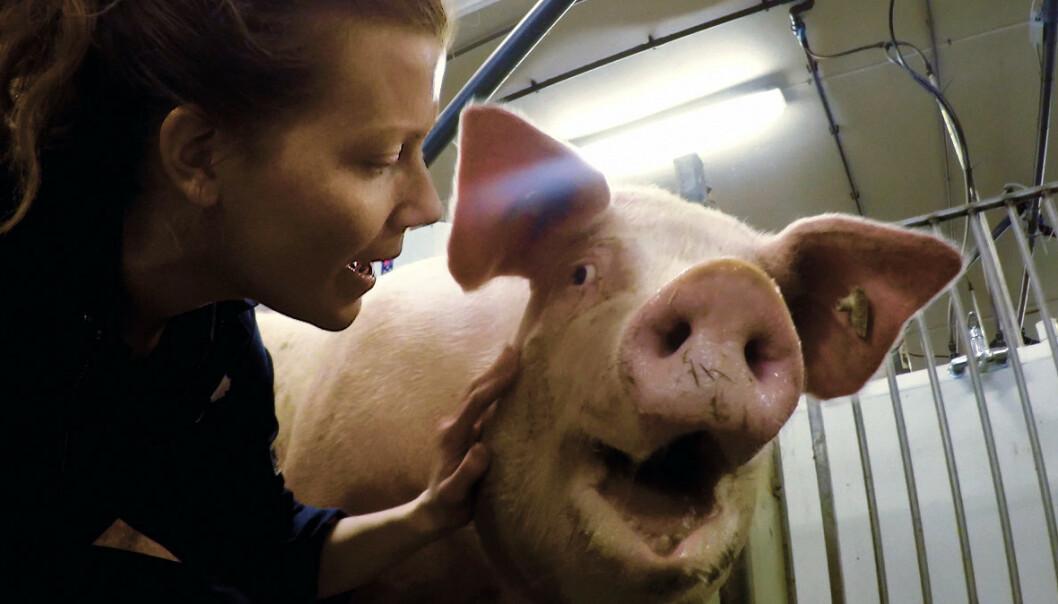 Filmen svinebønder frykter. Brukte skjult kamera i fem år