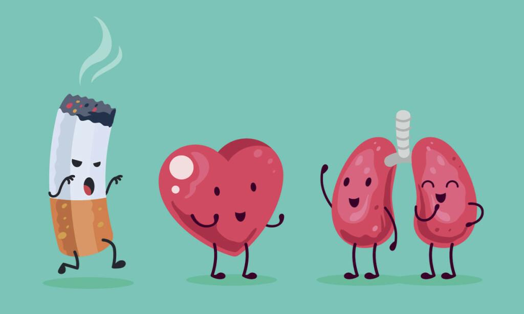 SKADER KROPPEN: Når du røyker skades lunger, hjerte, blodårer og hjernen. Jo mer du røyker, desto verre blir skadene Illustrasjon: NTB Scanpix/Shutterstock