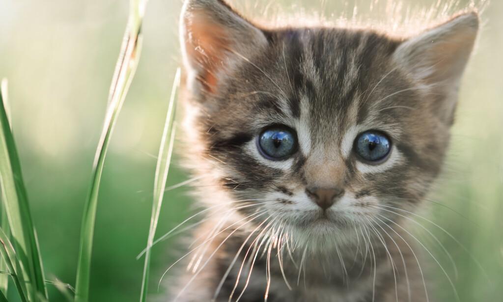 DUMPING: Katter er de kjæledyrene som er mest utsatt for dumping fra eiers side. Foto: Smit / Shutterstock / NTB scanpix