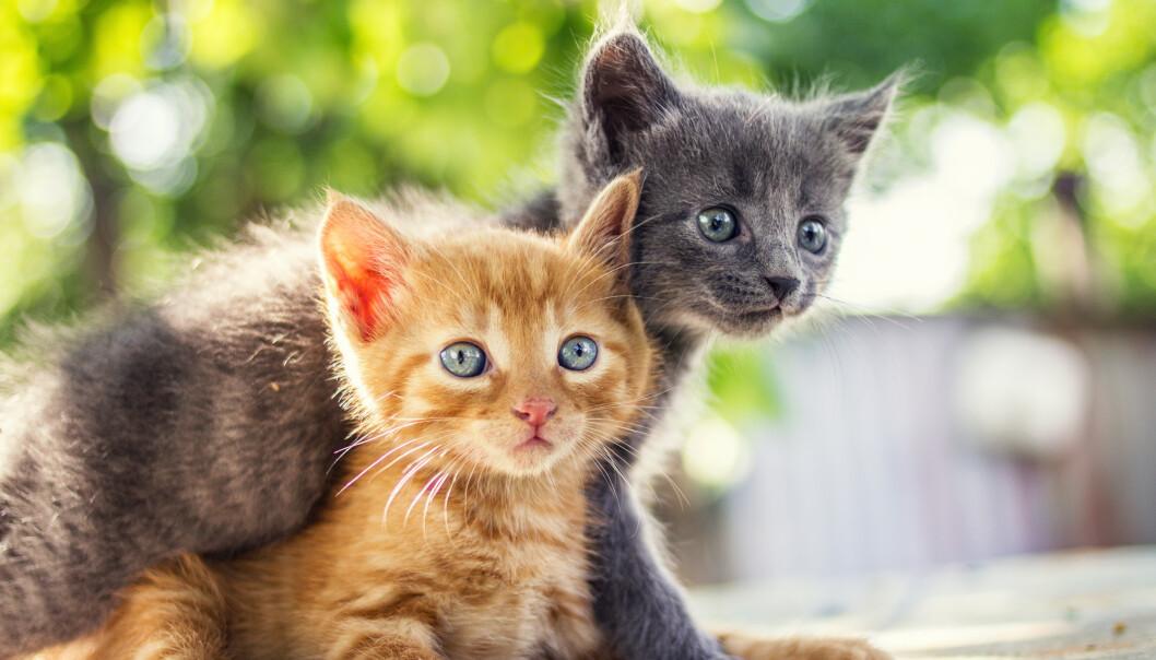 KATTEPINE: - Å reise fra dyr uten tilsyn er straffbart, minner dyrevernorgansiasjonene om. Foto: NTB Scanpix