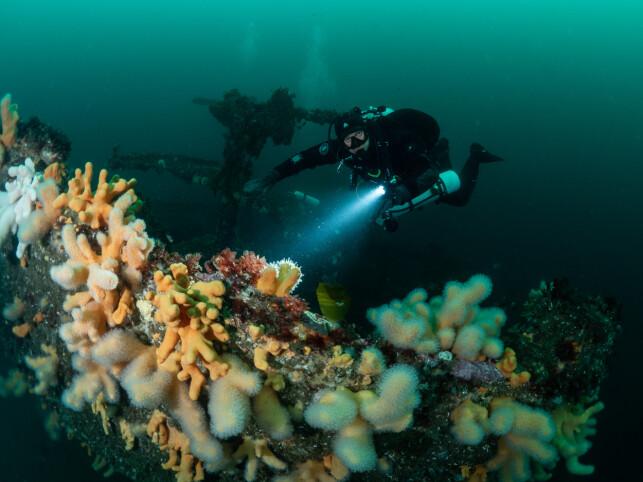 Jonas Follesø liker å dykke. Det er en fordel, når du jobber med undervannsdrone. 📸: Hege Røkenes / Privat