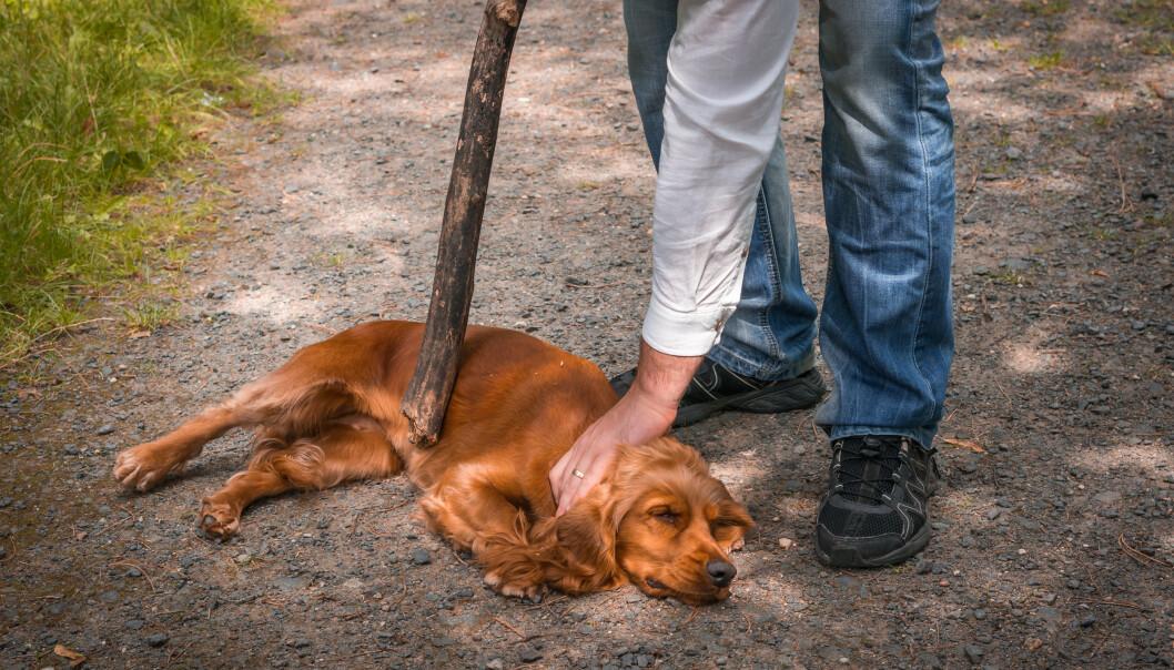 <strong>NEKTES Å EIE KJÆLEDYR:</strong> Det er minst 31 personer som nektes å eie kjæledyr i Norge. Foto: Andriano.cz/Shutterstock/NTB scanpix. (Illustrasjonsbilde).