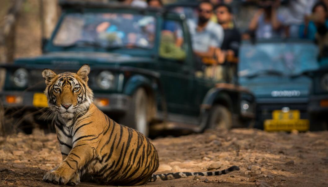 DYREVELFERD: Mye tyder på at vi boikotter diverste dyreparker på grunn av dyrevelferden. FOTO: NTB Scanpix