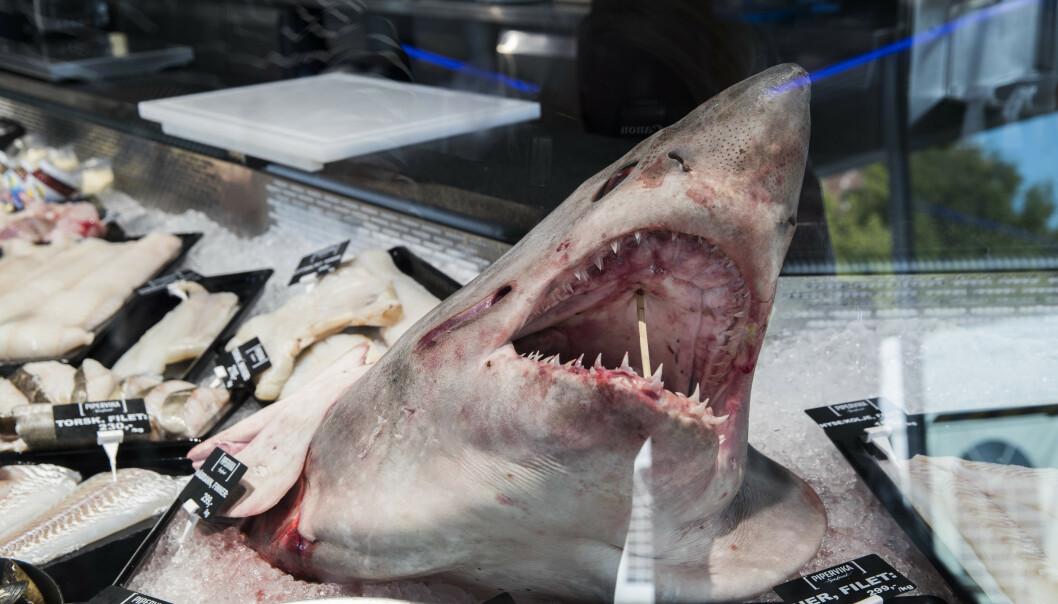 Overfiske og forurensing truer haibestanden i Middelhavet, advarer WWF. Illustrasjonsfoto: Foto: Berit Roald / NTB scanpix