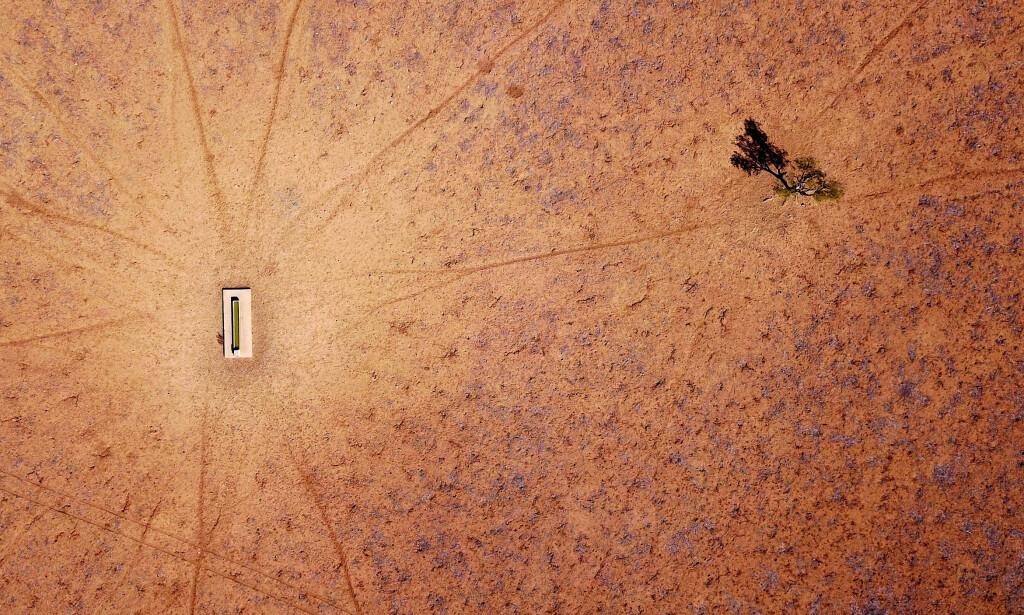 KNUSKTØRT: Et ensomt tre i nærheten av et drikkekar i Walgett, New South Wales, Australia fra i fjor. Området er spesielt rammet av tørken som fortsatt herjer landet. Foto: Reuters / NTB Scanpix