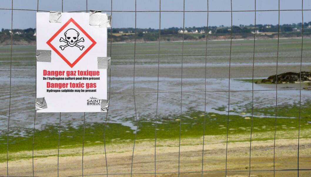<strong>STENGT:</strong> Skilt som advarer mot giftig gass har blitt satt opp på stranda i Vallais, nordvest i Frankrike. Foto: Loic Venance / AFP / NTB Scanpix