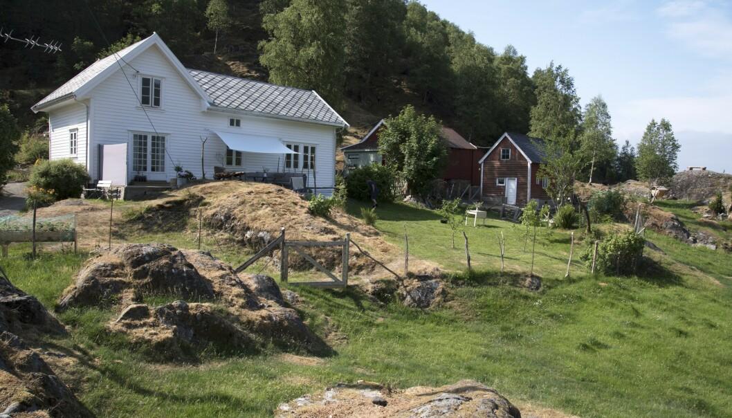 <strong>Ryddet tomta:</strong> Gården Sørheim i Åkrafjorden ble nesten ikke brukt på 25 år. Skogen vokste tett inntil husveggene da familien fra Karmøy overtok. Foto: Irene Jacobsen