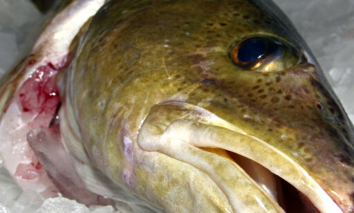 image: Omfattende fiskesmugling er trolig organisert kriminalitet