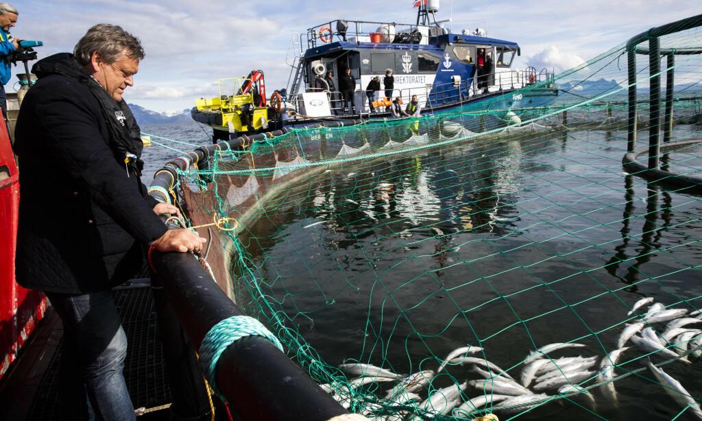 PÅ AVVEIE: Fiskedritten er ressurser på avveie. Ved å drifte i lukkede anlegg, vil vi ta vare på dritten og bruke den som biogass, jordforbedring, i algedyrking og sågar i sementproduksjon, skriver innsenderen. Her er fiskeriminister Harald T. Nesvik (Frp) i Lødingen. Algeoppblomstringen i mai tok livet av over ti tusen tonn laks. Foto: Berit Roald / NTB scanpix