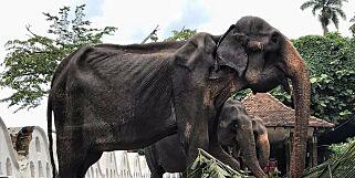 image: Raser etter bilde av utmagret elefant